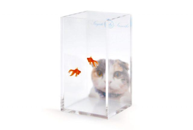 猫と金魚のユニークな四角型アクリルペンスタンド
